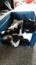 Tilly and kittens