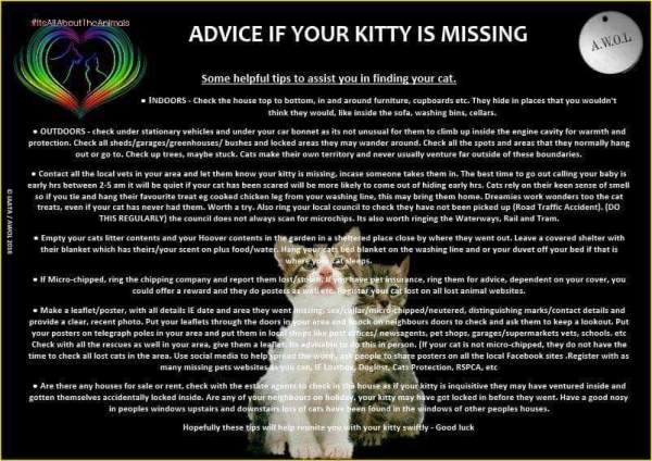Missing Moggies Linas Cat Rescue - Missing cat gets found next to his own missing cat poster