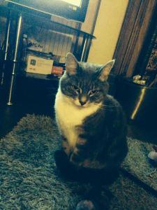 Millie (female) - 6 years