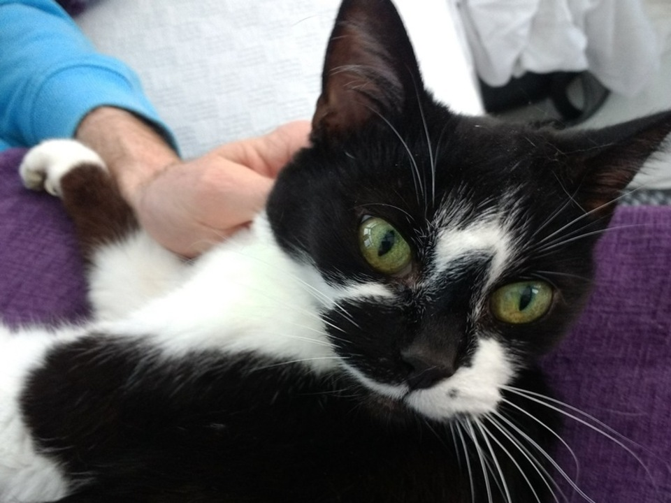 Lina S Cat Rescue
